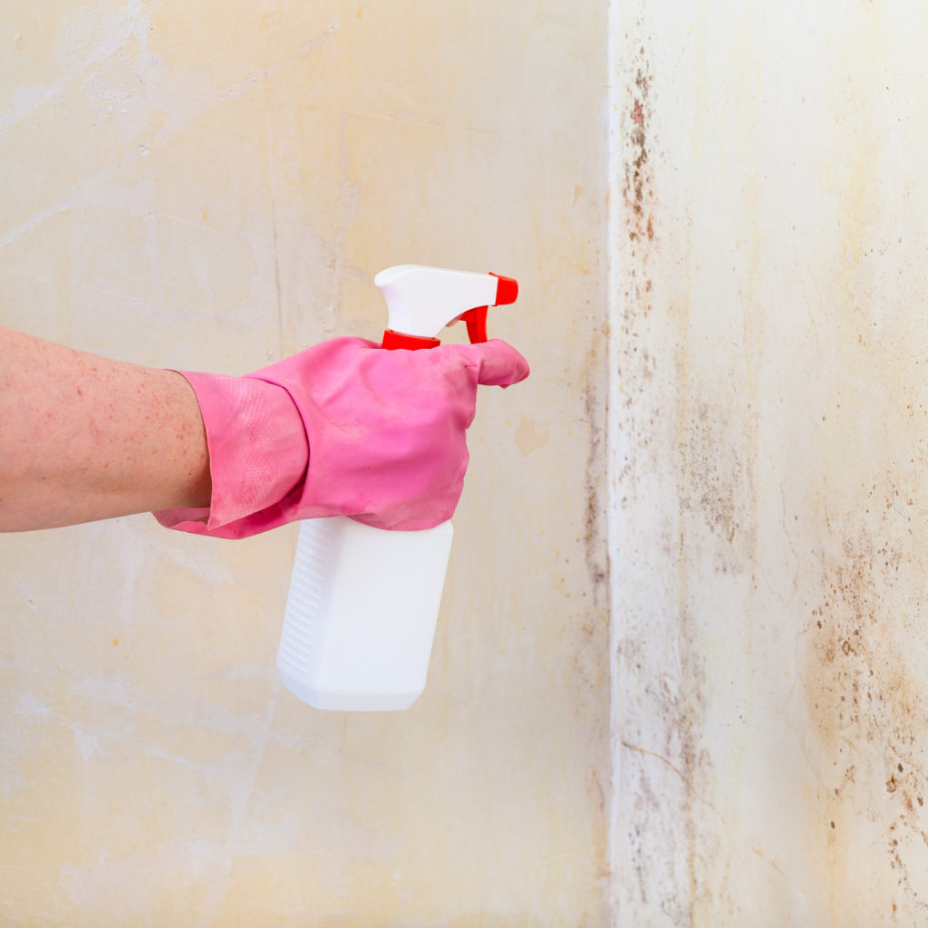 removing-mold-from-home